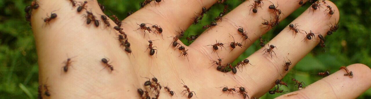 Tipps gegen Ameisen