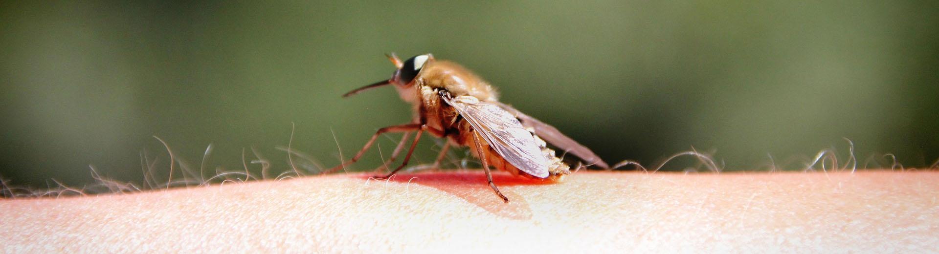 hausmittel gegen insektenstiche kammerj ger ratgeber. Black Bedroom Furniture Sets. Home Design Ideas